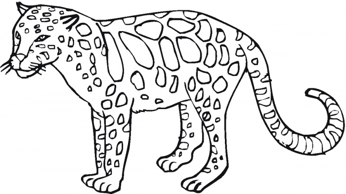 Coloriage animaux sauvages - guépard