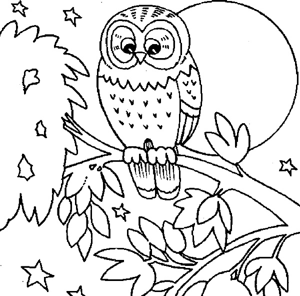 Owl In Tree At Night Coloring Page