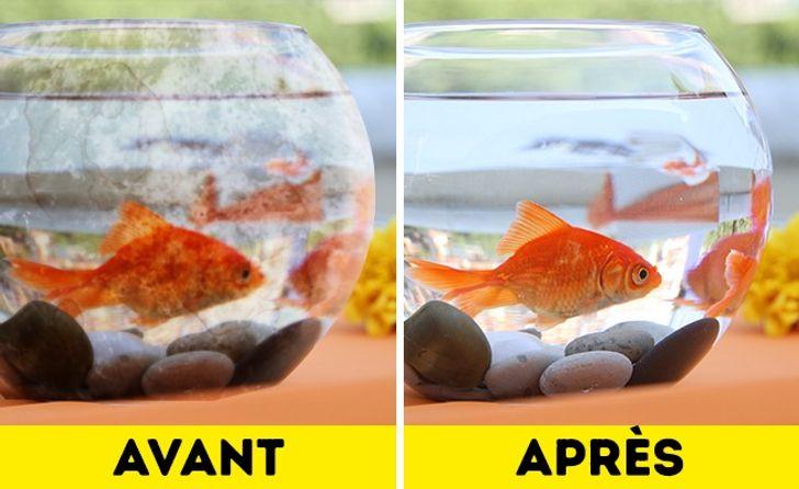 Élimine le tartre de l'aquarium