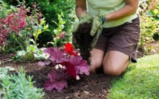 Faites les bons mélanges de terre