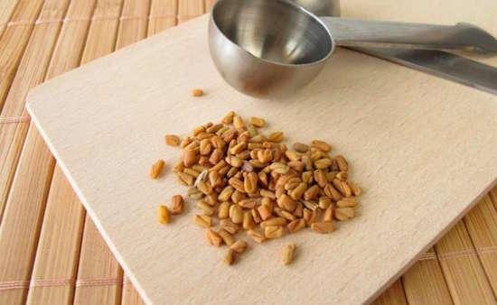 Les graines de fenugrec