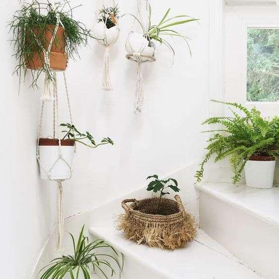 Les plantes... vos meilleures alliées déco