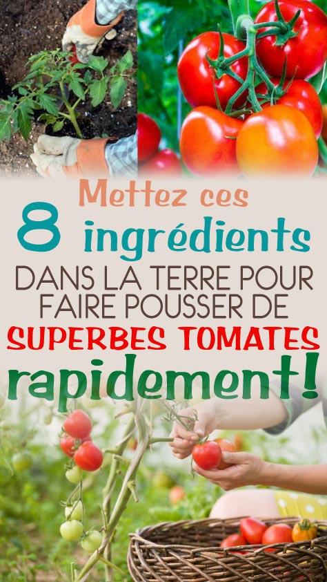 Mettez ces 8 ingrédients dans la terre pour faire pousser de superbes tomates rapidement!