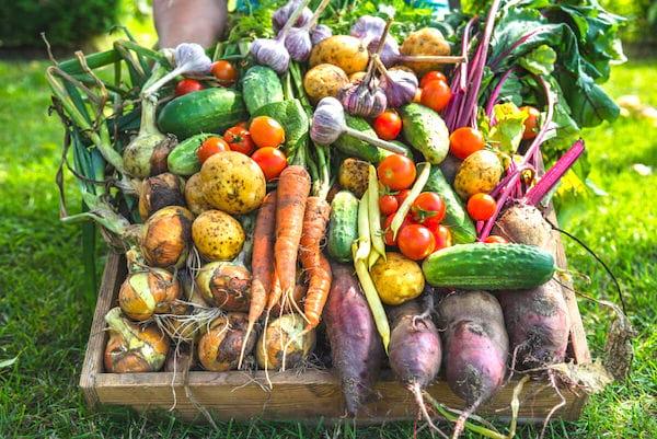 Quels sont les fruits & légumes que vous pouvez conserver dans une cave ?
