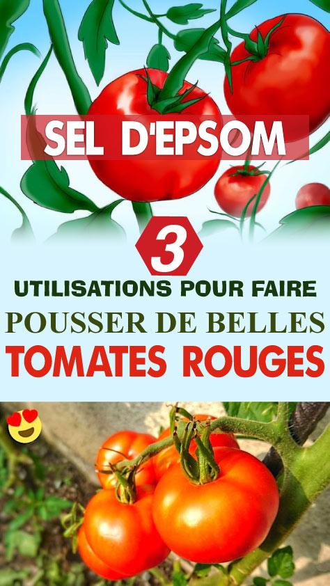 Sel d'Epsom : 3 utilisations pour faire pousser de belles tomates rouges