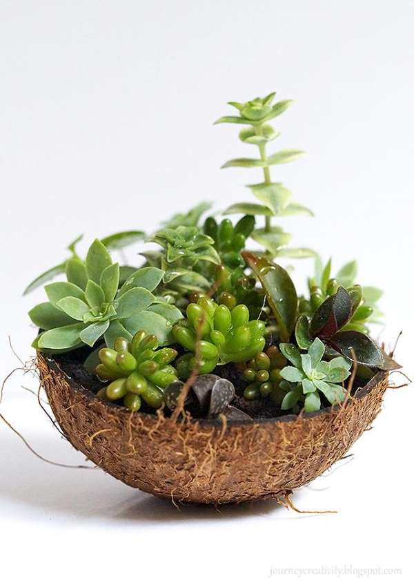 Utilisez une noix de coco comme alternative écologique au pot en plastique