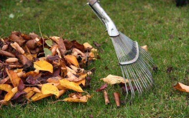 Utilisez vos propres végétaux pour couvrir le sol