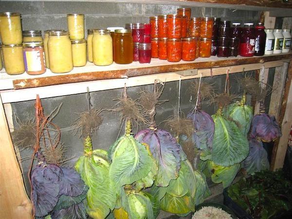 cave-a-légumes