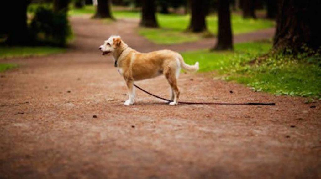 retrouver son chien perdu
