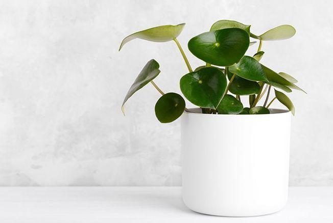 sauver-notre-plante