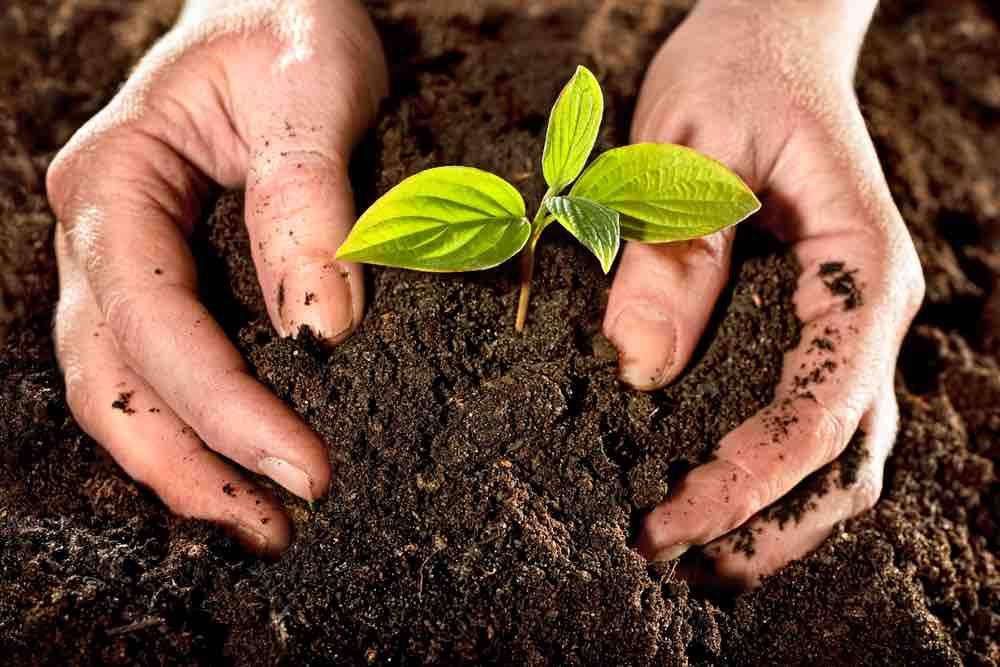 Engrais naturels pour des plantes toujours en forme