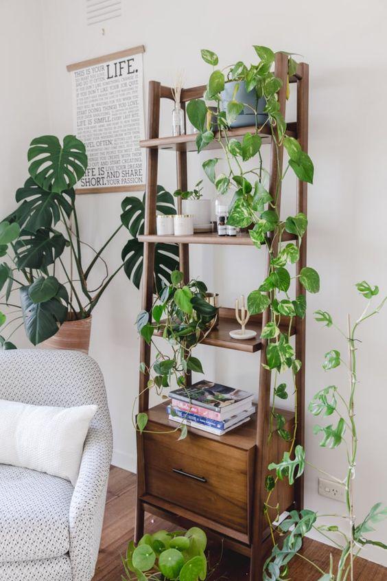 decoration plante intérieur